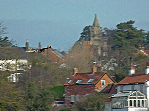 Buzzard with Keyworth in the background