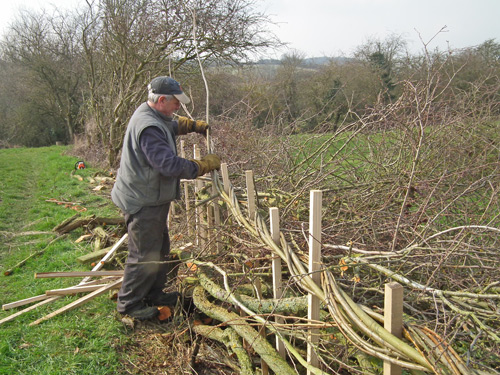 Mervyn Coleman laying in the willow bindings