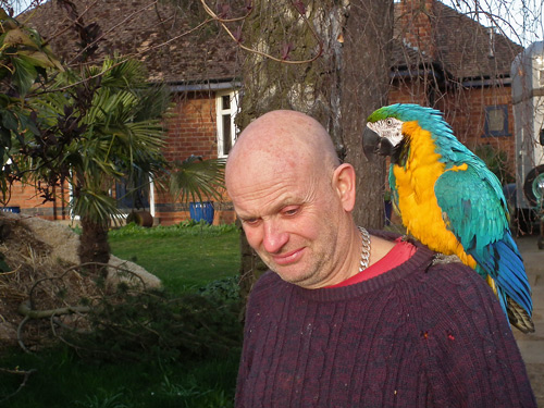 Dixie the macaw