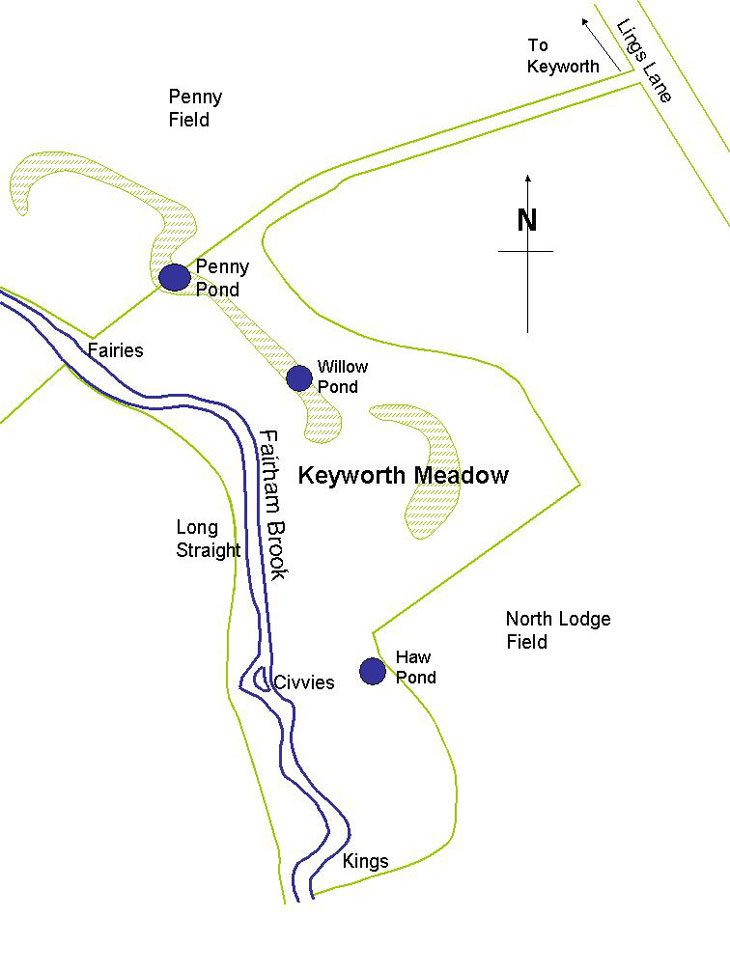 Sketch map of the meadow.